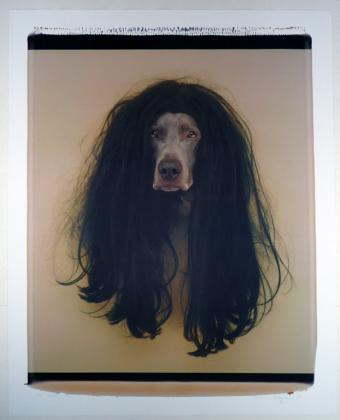 Click to enlarge Cher (Dog in Wig)